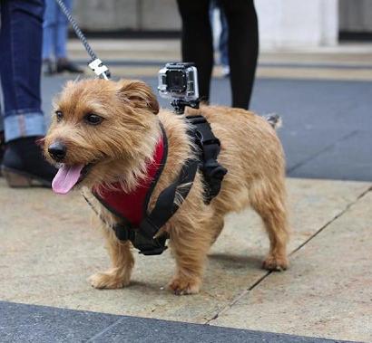 GoPro For Pooch